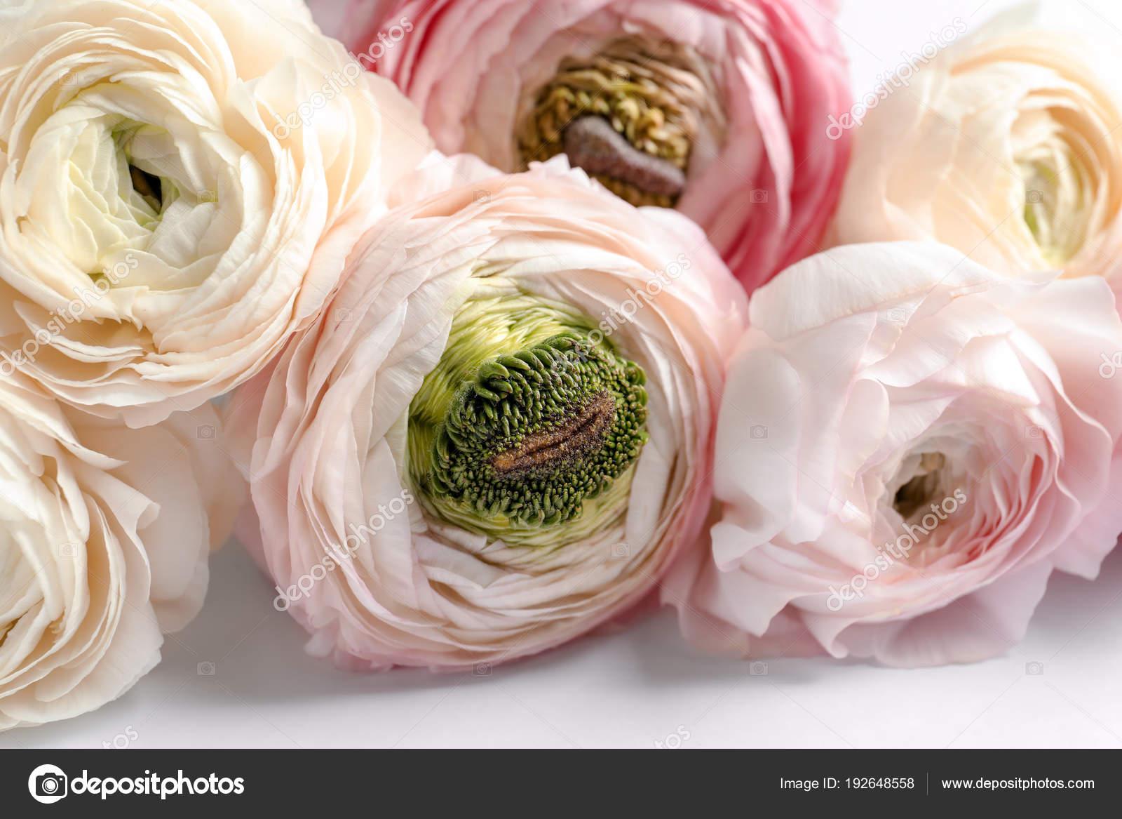 Ranunculus Flowers White Flowers Healthy