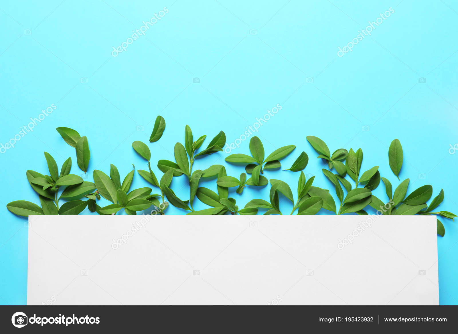 Blank card with green leaves on color background — Stock Photo ...