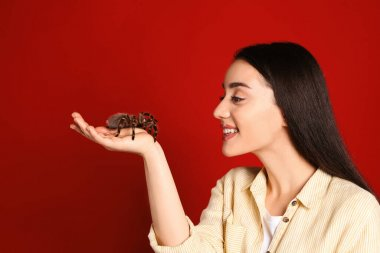 Woman holding striped knee tarantula on red background. Exotic pet