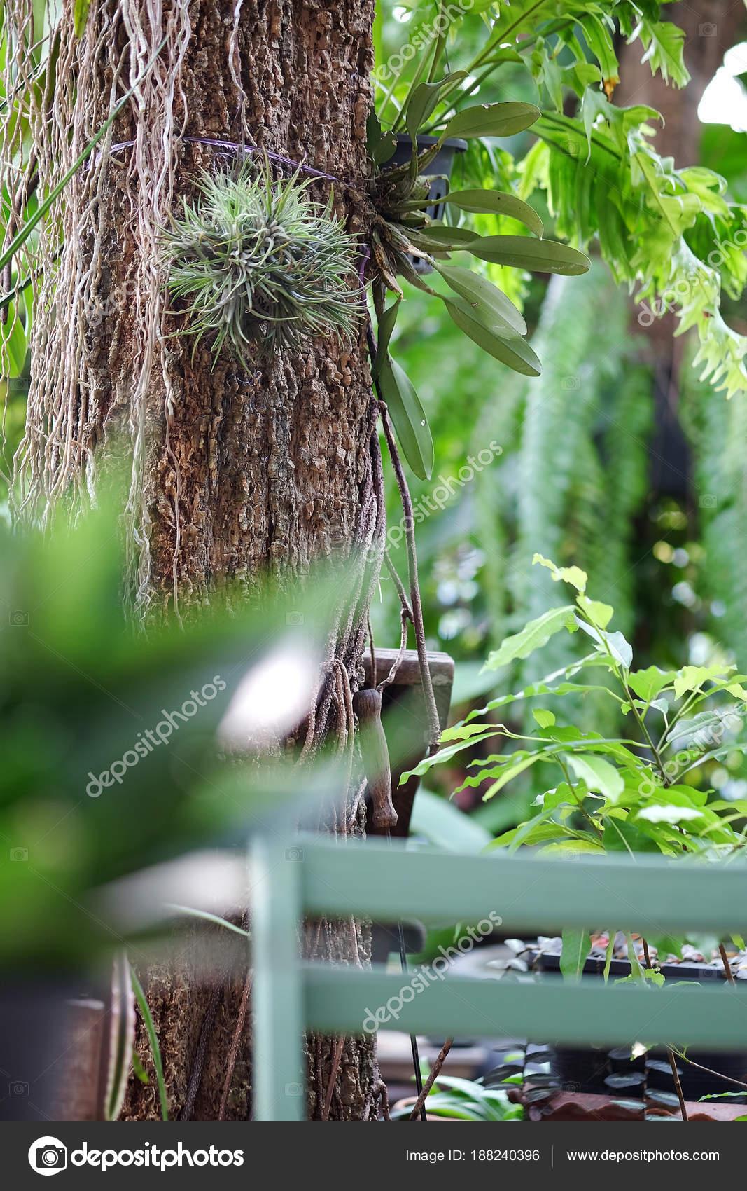 Farn Garten Farn Auf Baum Stockfoto Ponsulak 188240396
