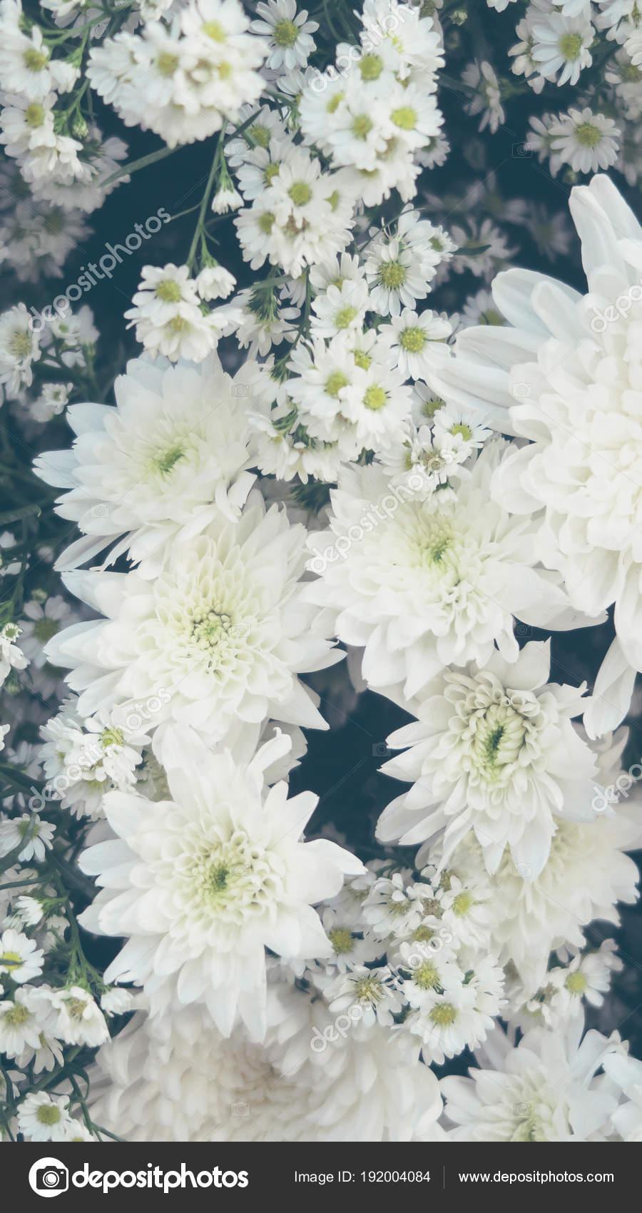 White Gypsophila Flower Background Stock Photo Ponsulak 192004084