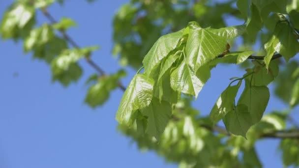Primo piano giovane pinnule verde