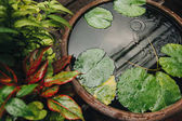 close-up view of beautiful green leaves in water, Bangkok, Thailand
