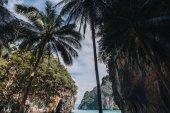 Fotografie palmy