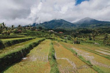 Scenic view of Jatiluwih Rice Terraces in Bali stock vector