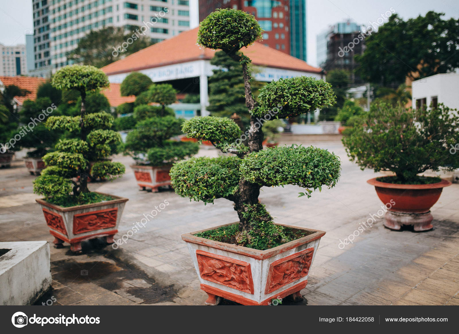 decorative trees — Stock Photo © AlexGukBO #184422058