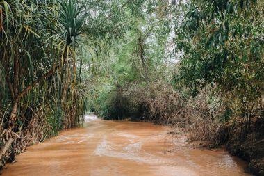 River in Rainforest at Fairy Stream Canyon. Mui Ne. Vietnam stock vector