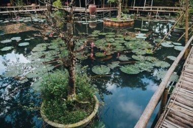 Beautiful lotus flowers in pond and wooden footbridge, Hue, Vietnam stock vector