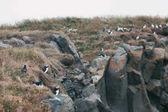 Fotografie puffins birds