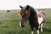 Fotografie horse