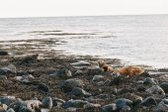 Fotografia leoni marini