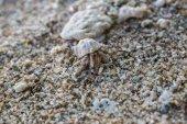 Photo crab