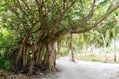Fotografie cesta a stromy