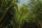 Fotografie zelené listy