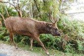 Fotografie deer