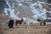 Fotografie grazing on pasture