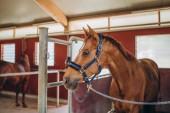 Fotografie hnědý kůň