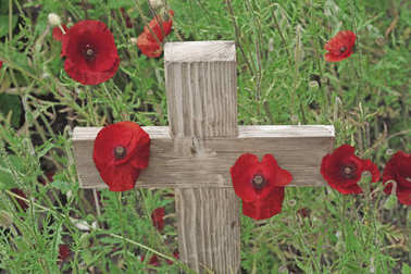Remembrance day a poppy and a wooden cross - A wooden cross standing upright with  poppies growing around it's base and green foliage in the background