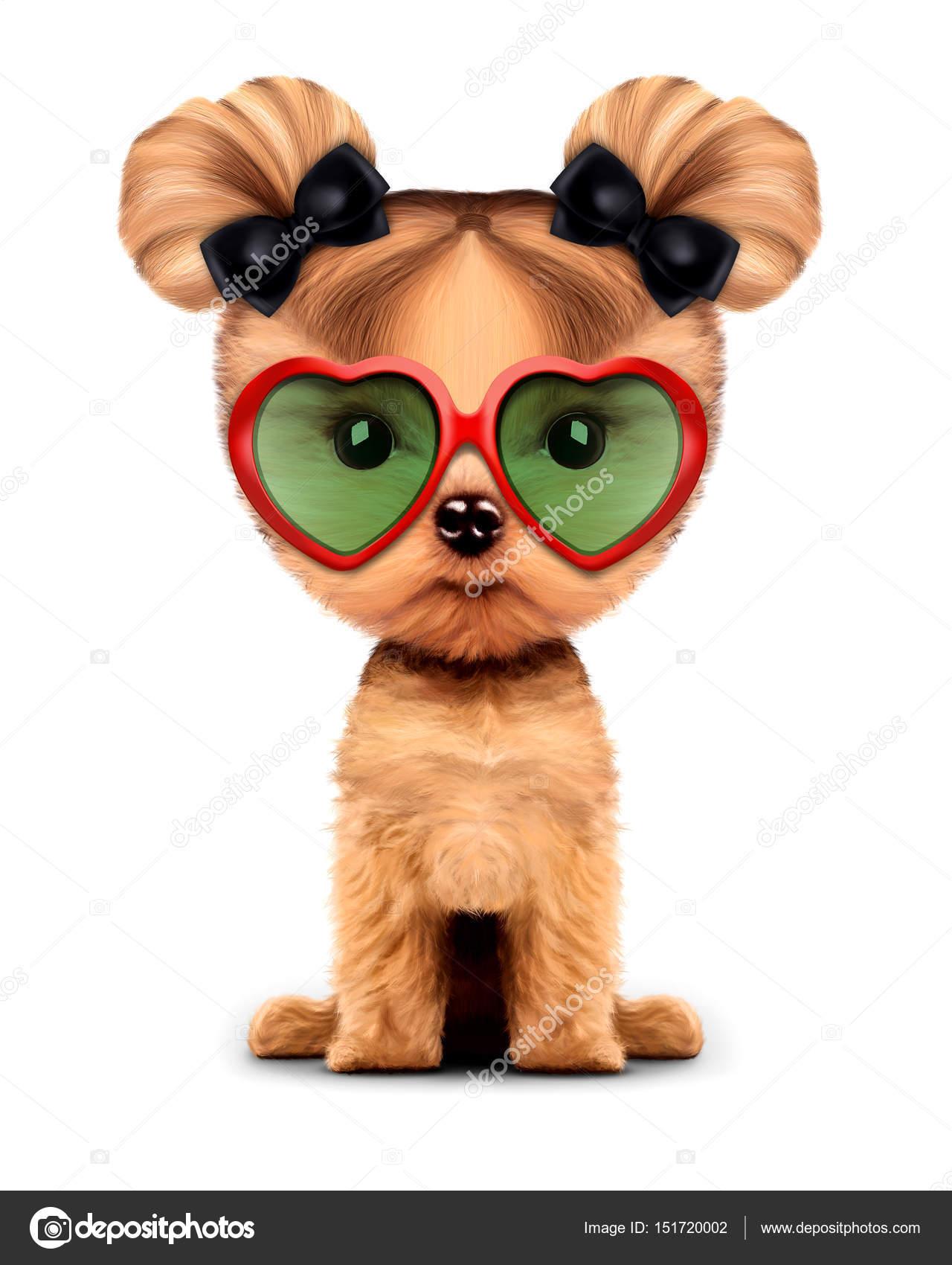 Cagnolino Con Adorabile Occhiali SoleIsolato Su Da Bianco 29WEDHI