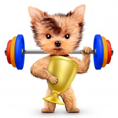 Funny dog training with barbell and hold reward
