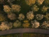 Fotografie stromy a silniční