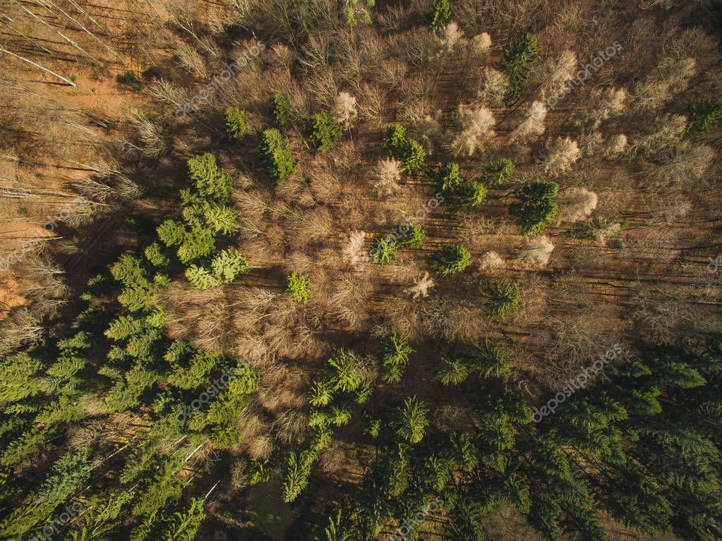 Фотообои pines