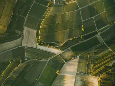 agro fields