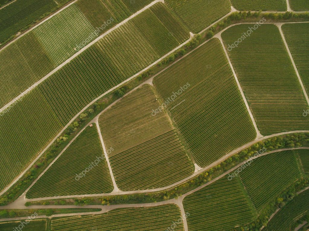 bird eye view of green agricultural fields, europe