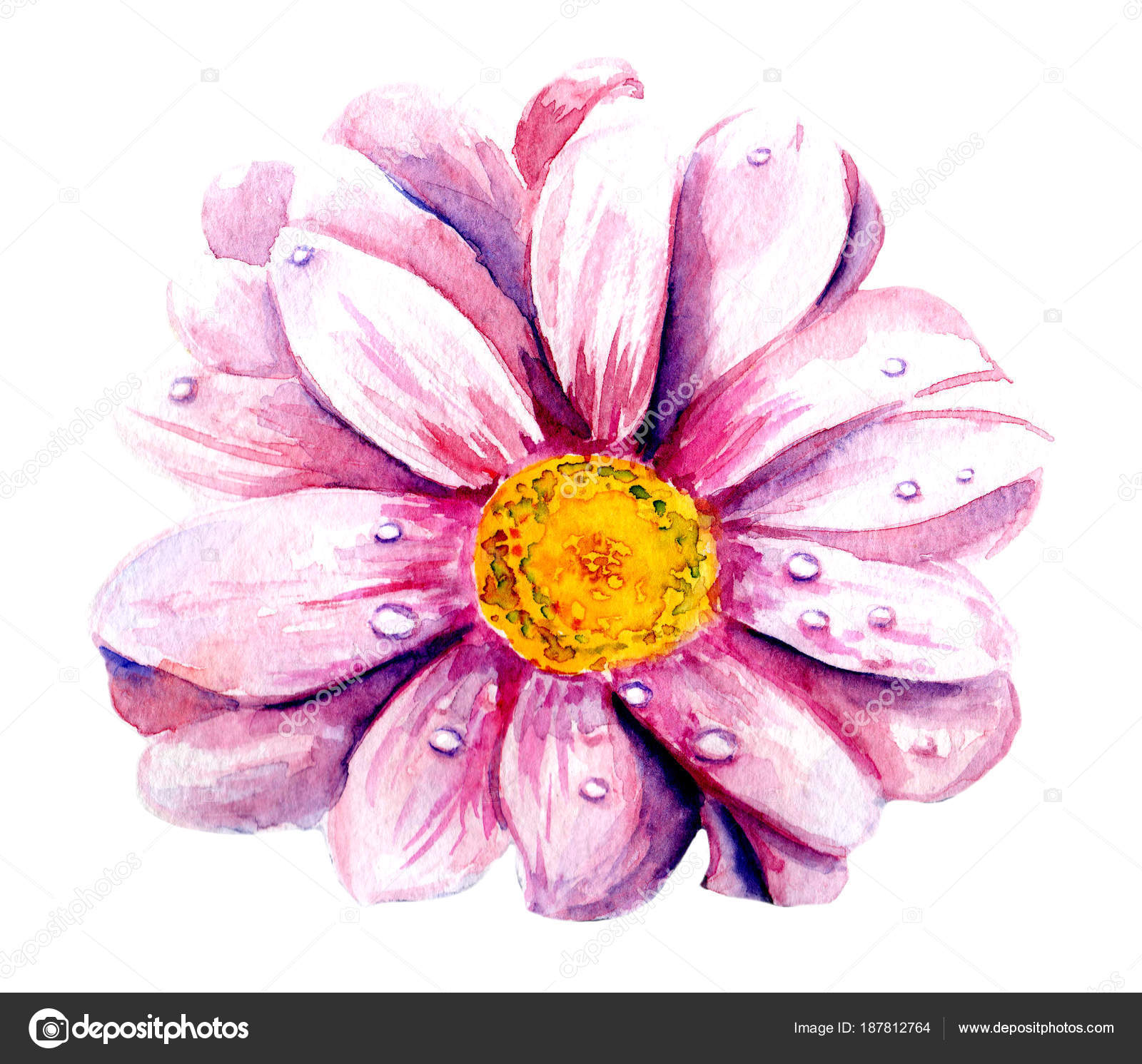Fiore Rosa Dell Acquerello Senza Sfondo Foto Stock Toshka81