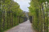 Fotografie Allee im Park, Bayreuth, Deutschland