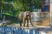Slon v zoologické zahradě, Slovensko