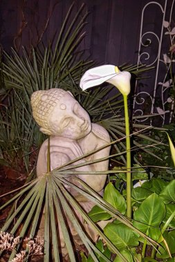 UK - NOVEMBER, 2017 - Calla Lily at night with Buddha statue
