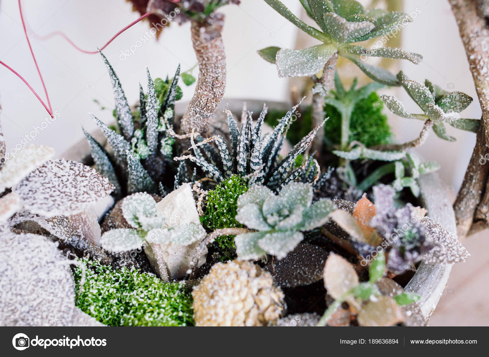 Kalanchoe et succulentes plantes, décorées dans une marmite ...