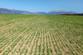 Photo Field with lines of young sow green plants, panorama of High Tatras and mt. Krivan peak (Slovak symbol) in distance