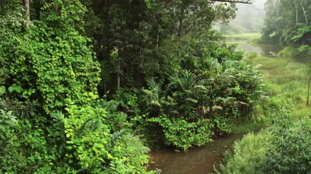 Calm morning in African jungle, rainforest with small river. Vibrant green foliage - most of it endemic to Madagascar.