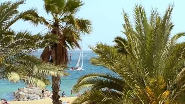 Palm on tropical beach, sunny summer day