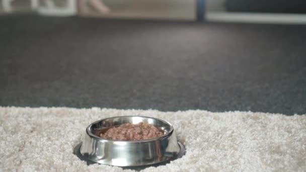Hunde fressen Hundefutter aus der Schüssel auf dem Boden
