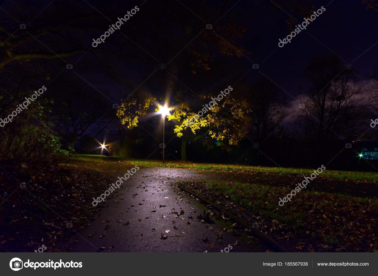 Fondos Pantalla Camino Parque Noche Por Luz Fondo Foto De