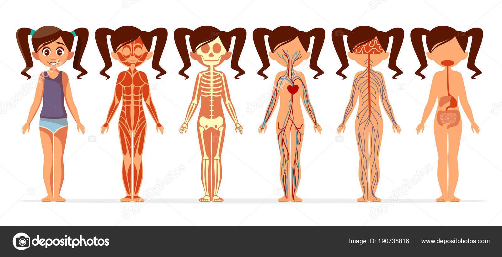 Ilustración de dibujos animados de vector chica cuerpo anatomía de ...
