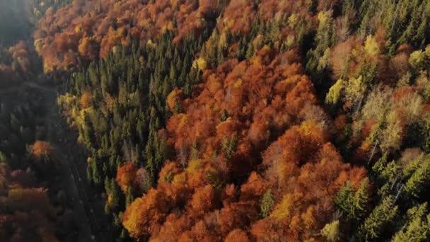 Epický letecký pohled na smíšený smrk a opadavý zelený a oranžový podzimní les. Epic Glory Inspiration Hiking and Tourism Concept. 4k