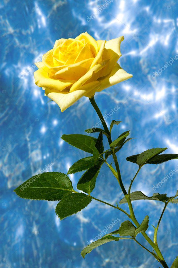 Texture Pattern Background Roses Plant Beautiful Large Fragrant Flowers Stem Stock Photo C Ekina1 127754496