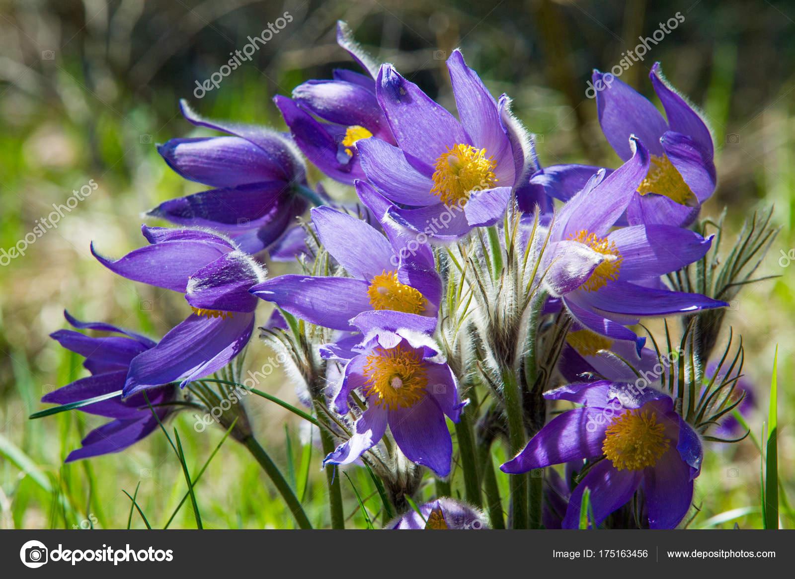 Paysage De Printemps Fleurs Qui Poussent Dans La Nature Fleur De