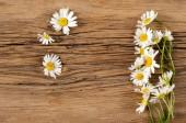 Wildflowers. Studio photography. Camomile, jasmine, on the blackboard