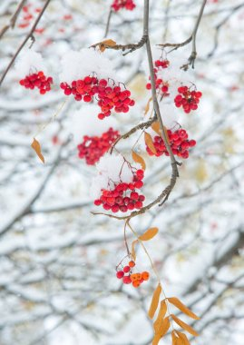 Autumn landscape of photography, the first snow fell on the bran