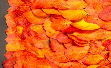 texture, background, pattern, autumn leaves, bright saturated co