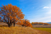 Autumn landscape, deciduous trees covered with multi-colored yellow red leaves, Oaks throw off multi-colored autumn foliage, sad time of the eye - this is the charm