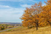 Autumn photography, local country road, beautiful landscape with trees in autumn