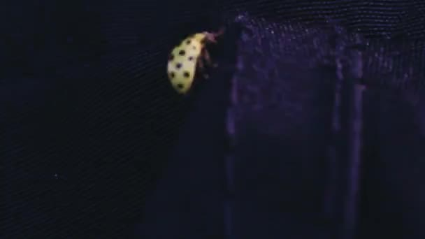 ladybug (ladybird) sitting on a leaf in a macro shot