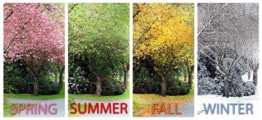 Four seasons on the same street.