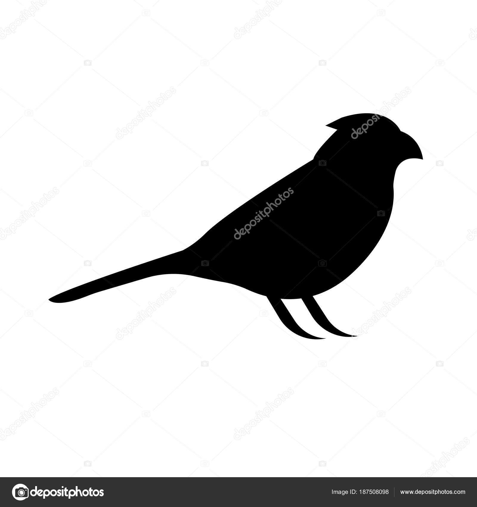 λευκό μαύρο πουλί γυμνό Ασιατικό Λεσβιακό πορνό